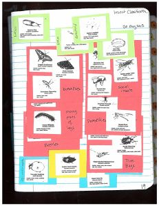 page19 Insect Classification